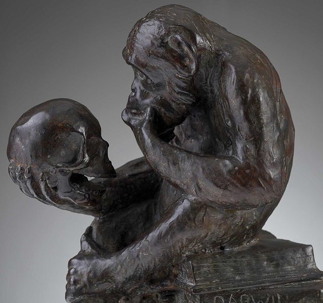Ape_and_skull