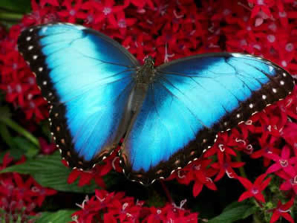 biomimicry butterfly wings could inspire next gen solar power