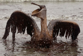 Charlie_riedel_crucified_pelican