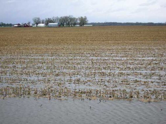 Corn-flooded-field
