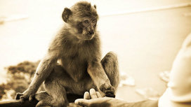 Monkey_touch