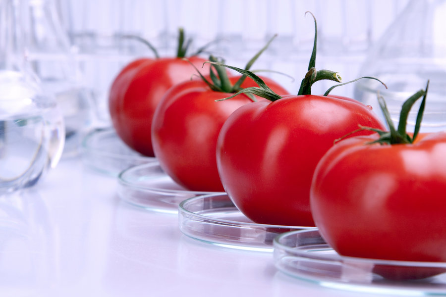 Examples of Genetically Modified Foods Genetically Modified Foods