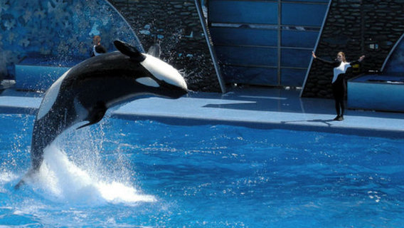 Seaworld-photo-final