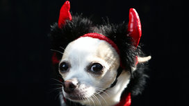 Doggy_devil