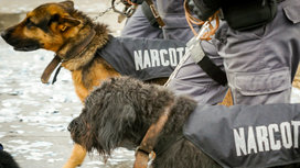 Drugs_narcotics_police_dogs