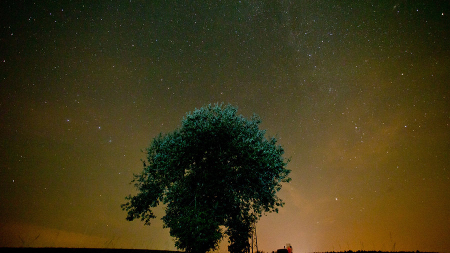 Perseid-meteor-shower-night-sky-tree
