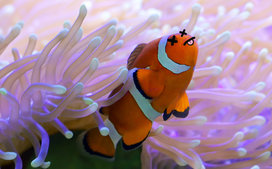Coral_reef_nearly_dead
