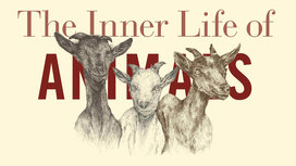 Inner_life_of_animals6