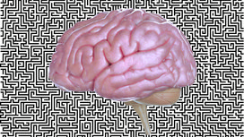 Nectome_brain_upload_2