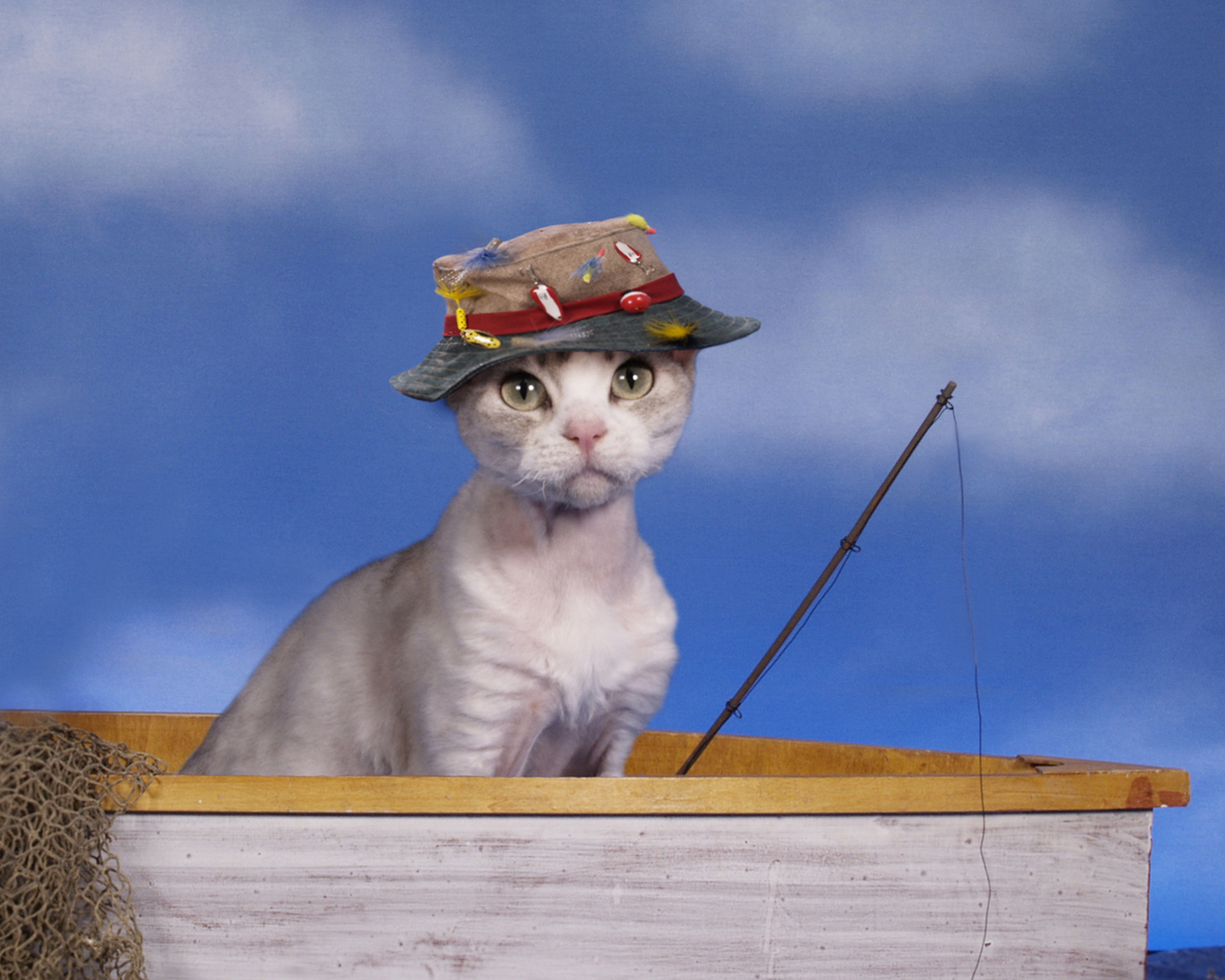 Science look at these cute cats to boost your for Cats go fishing