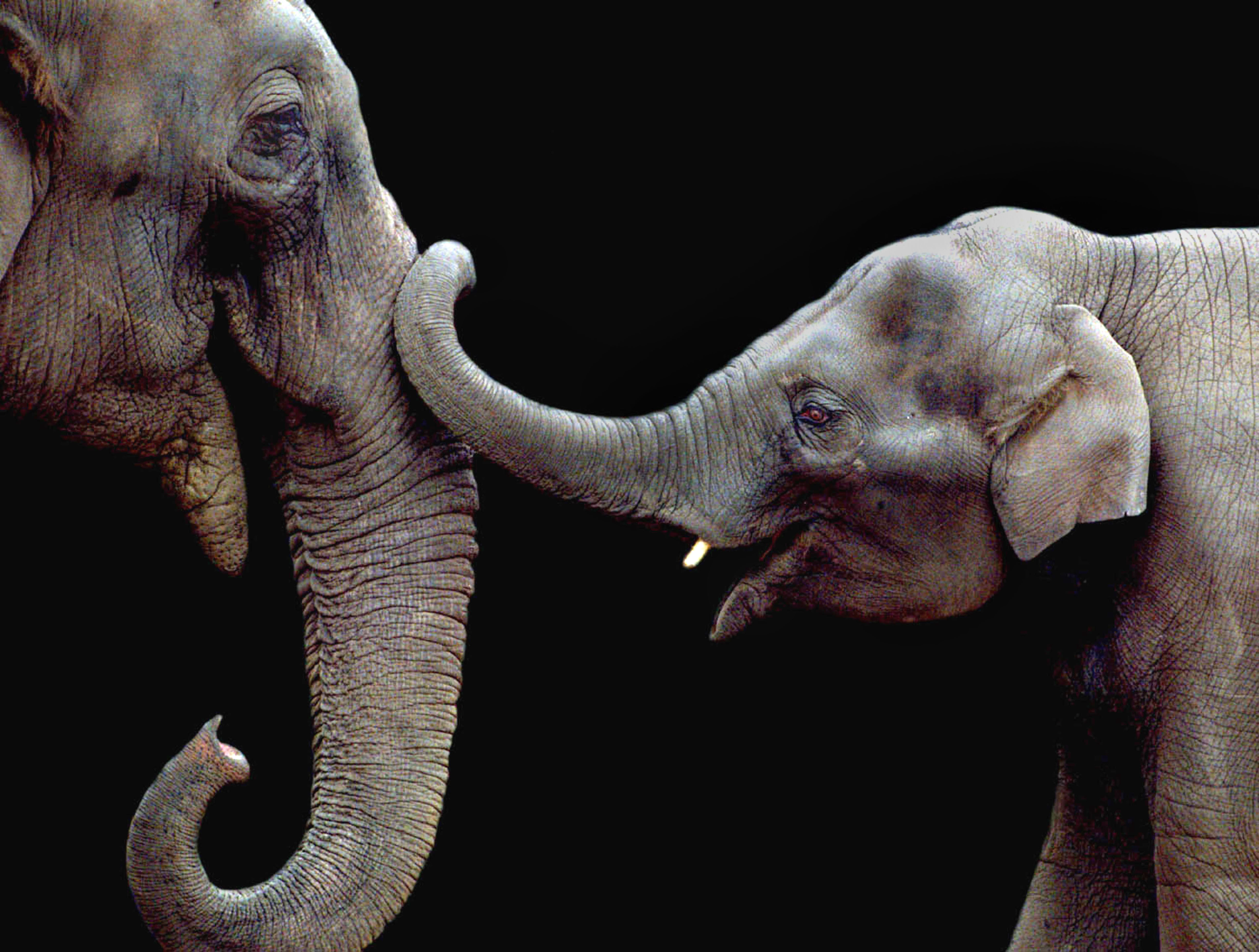 Elephant mother and child