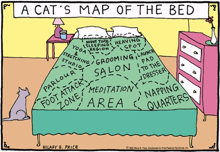 A Cat's Map of the Bed