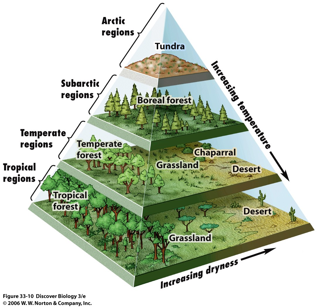 A Pyramid Map Of The Worlds Biomes Big Think - Biome map of the us drawing