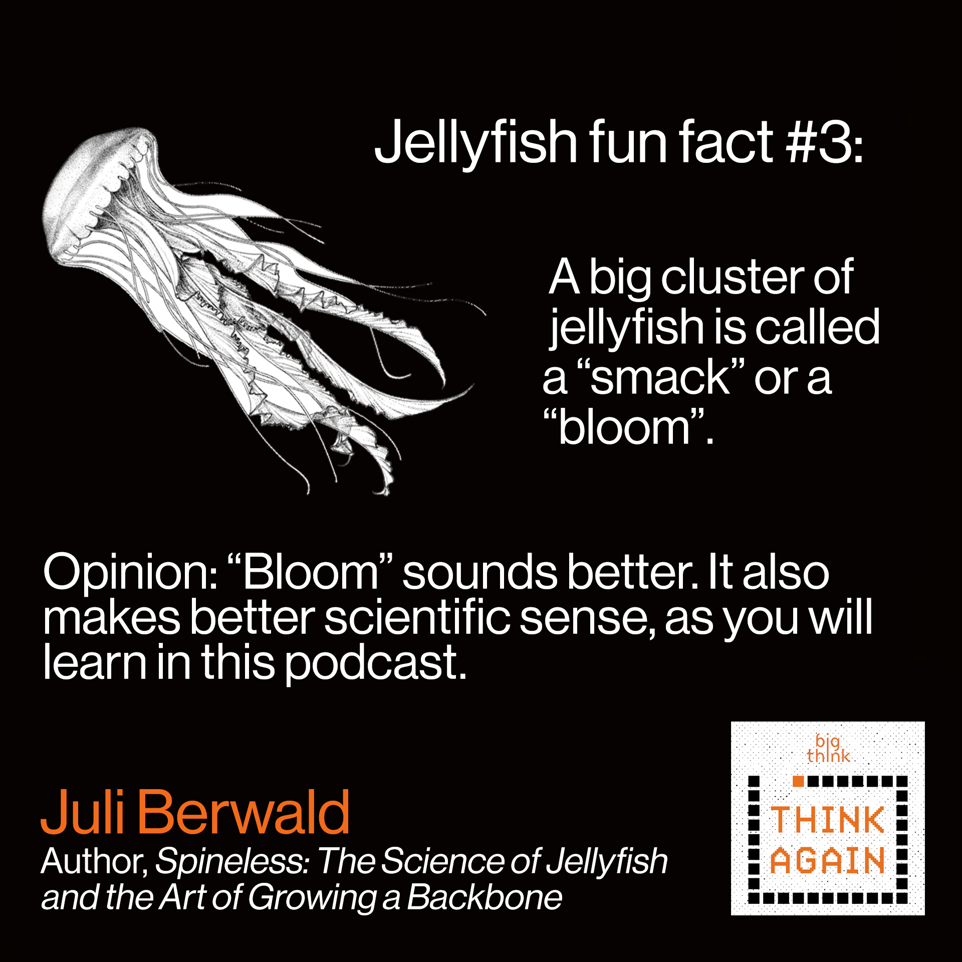 "Jellyfish fun fact #3: A big cluster of  jellyfish is called a ""smack"" or a ""bloom"".   Opinion: Bloom sounds better."