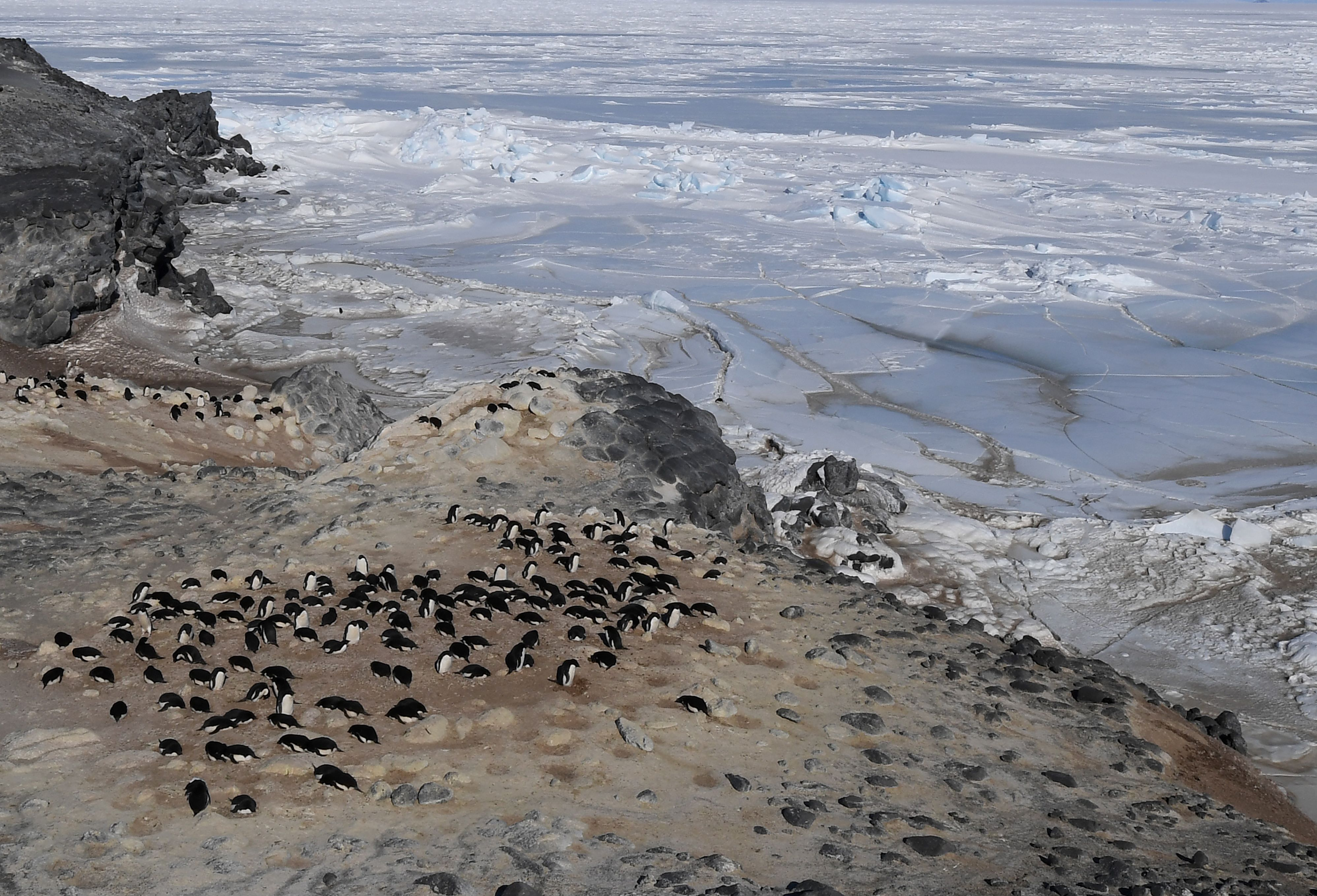 ANTARCTICA-US-DIPLOMACY An Adelie penguin colony beside the frozen Ross Sea area near McMurdo Station, Antarctica on November 11, 2016. (MARK RALSTON/AFP/Getty Images)
